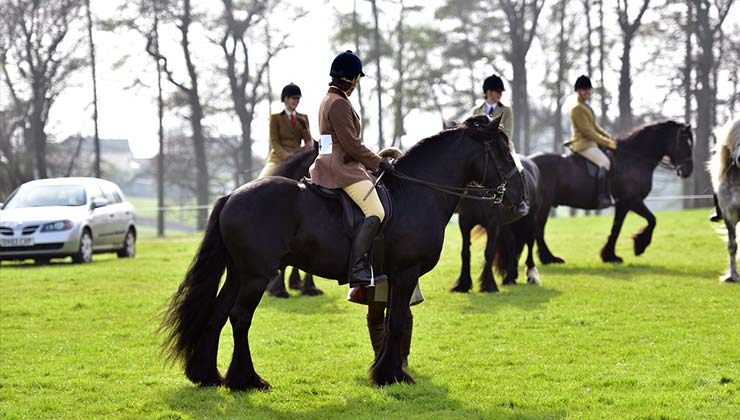 great-all-rounders-foundation-horse-training-show-line-up